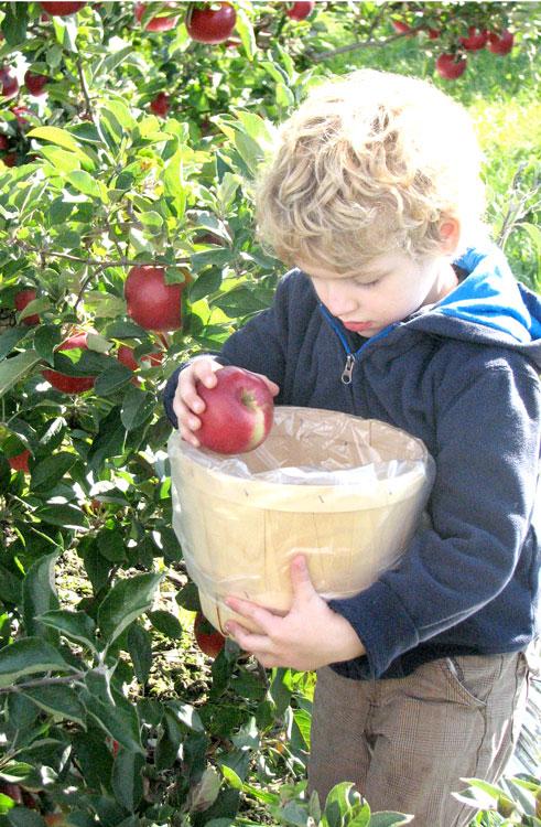 Apple-picking-hux