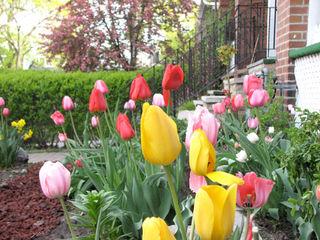 Tulip-path