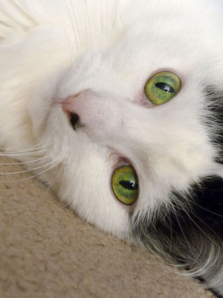 Lucy-green-eyes
