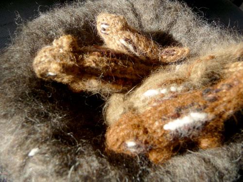 Chippies-nest