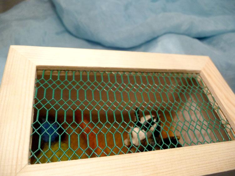Bunny-cage-1