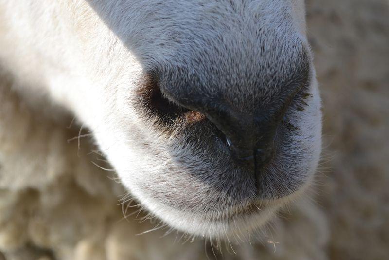 Baah-nose