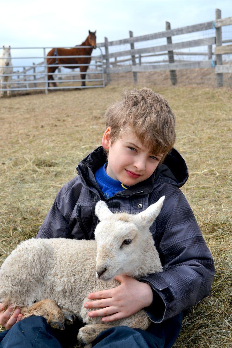 Huxley-lamb-horse